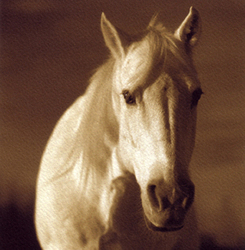 Horse022